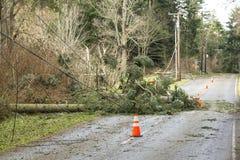 Stupade träd och besegrade kraftledningar som blockerar en väg; faror efter en naturkatastrofvindstorm arkivfoto