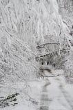 Stupade träd på vägen i vintersnöstorm royaltyfri bild