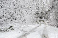 Stupade träd på vägen i vintersnöstorm royaltyfria bilder