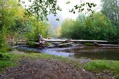 Stupade träd på vattnet Arkivbild