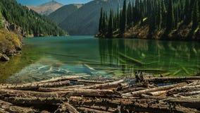 Stupade träd skapade en fördämning på sjövattnet Kolsay 4K TimeLapse - September 2016, Almaty och Astana, Kasakhstan stock video