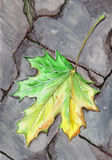 Stupat blad för vattenfärghöstlönn på asfalt Arkivfoton