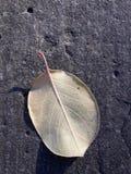 Stupat blad på stenyttersidan Arkivfoton