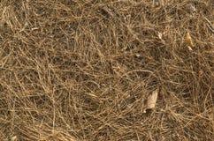 Stupat sörja trädsidor på golvbackgronden Royaltyfria Foton