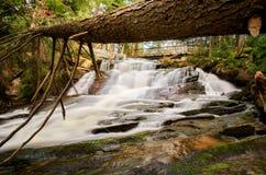 Stupat träd över en vattenfall Royaltyfri Bild