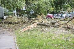 Stupat träd efter en orkan som ligger på jordningen arkivfoto