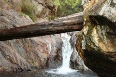 Stupat träd i en flod på en valey Royaltyfria Bilder