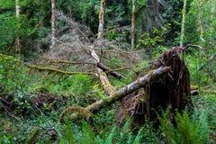 Stupat träd i en frodig grön skog som ryckas upp med mossa royaltyfri bild