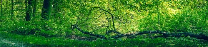 Stupat träd i en grön skog Royaltyfria Bilder