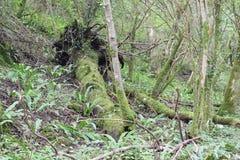 Stupat träd, Mendips arkivbilder