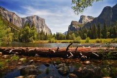 Stupat träd, Merced flod, Yosemite dal Royaltyfri Fotografi