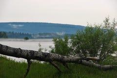 Stupat träd på bankerna av floden, dimmig morgon arkivbilder