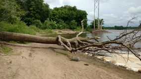 Stupat träd på en strand Arkivbild