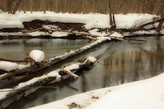 Stupat träd som lägger i The Creek Arkivbild