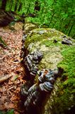 Stupat träd som täckas med vegetation royaltyfria foton