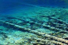 Stupat träd under det färgrika vattnet Arkivbild