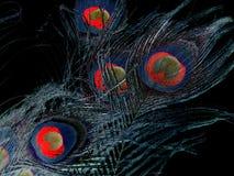 ` Stupefacente erotico adorabile s della piuma del ` s del pavone Fotografie Stock