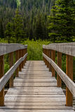 Sturdy Bridge in Pine Forest Royalty Free Stock Images