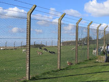 Sturdy concrete and wire fencing Stock Photo