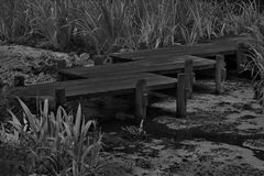 Black and white of wooden bridge over stream with algae. Sturdy wooden bridge is only path over swampy water in black and white photograph.  Location is Nitobe Royalty Free Stock Photos