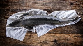 Sturgeon fish with dill and lemon on rustic oak table Stock Photos