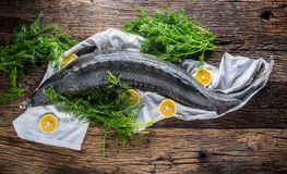 Sturgeon fish with dill and lemon on rustic oak table Stock Image
