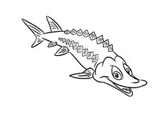 Sturgeon fish illustration coloring pages. Sturgeon fish smile illustration coloring pages isolated image Royalty Free Stock Photo