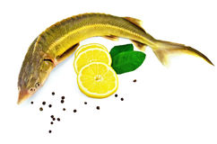 Fish starlet with lemon and leaf. Sturgeon fish with lemon, pepper and lemon green leaves two with a light shade on white background Royalty Free Stock Photo