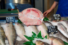 Sturgeon on fish market Stock Photography