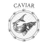 Sturgeon fish into round net engraving style. Logo for fish or caviar on white royalty free illustration
