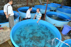 A sturgeon hatchery is being introduced to farmers in Tuyen Lam lake, Da Lat city Royalty Free Stock Image