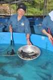 A sturgeon hatchery is being introduced to farmers in Tuyen Lam lake, Da Lat city Royalty Free Stock Photo