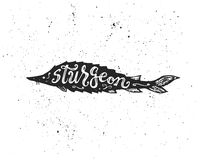 Sturgeon lettering in silhouette. Stock Images