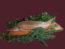Sturgeon with parsley Royalty Free Stock Photos