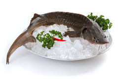 Sturgeon on plate Stock Photo