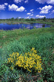 Sturgeon River Wildlife Area Stock Image