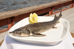 Sturgeon roasted on a plate royalty free stock image