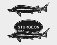 Sturgeon set. Vector Royalty Free Stock Image