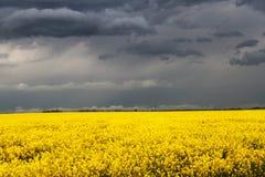 Sturm über Canola-Feld Lizenzfreie Stockfotos