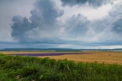 Sturm über dem Feld Stockfoto
