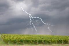 Sturm über dem Weinberg Stockbild