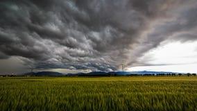 Sturm über den Feldern Stockfotografie