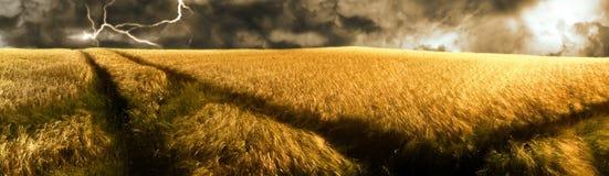 Sturm über einem goldenen Gerstenfeld Lizenzfreies Stockfoto