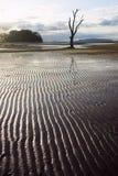 Sturm des späten Nachmittages am Strand Stockfoto