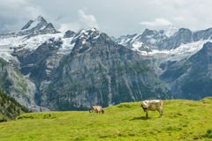 Sturm kommt in Schweizer Alpen stockfoto