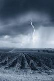 Sturm schlägt den Weinberg lizenzfreie stockfotos