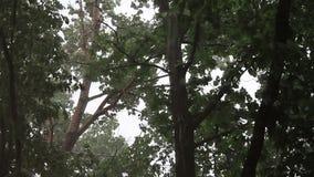 Sturm von Unterdrückungsbäumen stock video