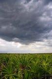 Sturm-Wolken über dem Grasland Stockfotos