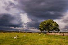 Sturm-Wolken über einer Yorkshire-Weide nahe Wharfedale Lizenzfreies Stockbild