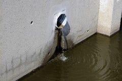 Sturmabflussrohr mit Wasser, das aus ihm heraus fließt Lizenzfreies Stockbild